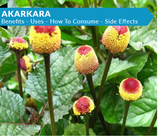 Akarkara Powder - ALKA AYURVEDIC PHARMACY